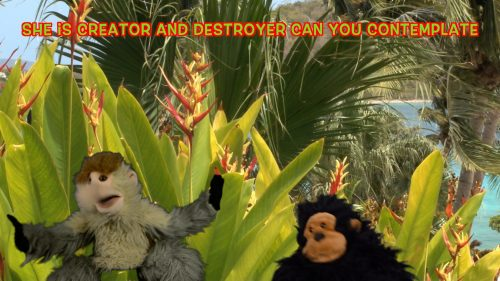 two-monkey-puppets-sing-about-nature